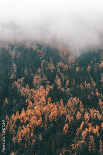 mgla-nad-jesien-kolorowy-las