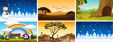 Six Different Scenes With Animals And Trees