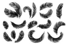 Black Feathers. Realistic Fluf...