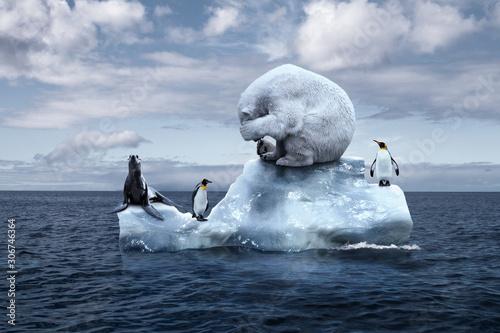 Photo polar bear sits on a melting glacier