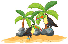 Two Toucans On White Background