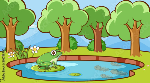Scene with green frog in the pond
