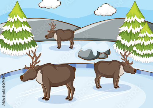 Scene with reindeers in winter