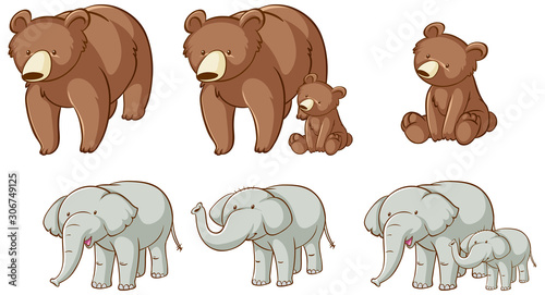 Isolated picture of bears and elephants