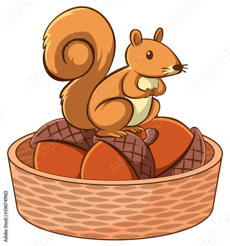 Foto auf Leinwand Kinder Squirrel in basket on white background