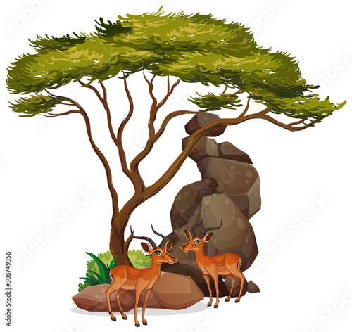 Isolated picture of two gazelles under the tree