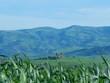 green wheat field beside the atlas mountains