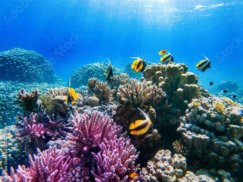 kolorowe koralowce i egzotyczne ryby na dnie Morza Czerwonego. piękne naturalne letnie tło