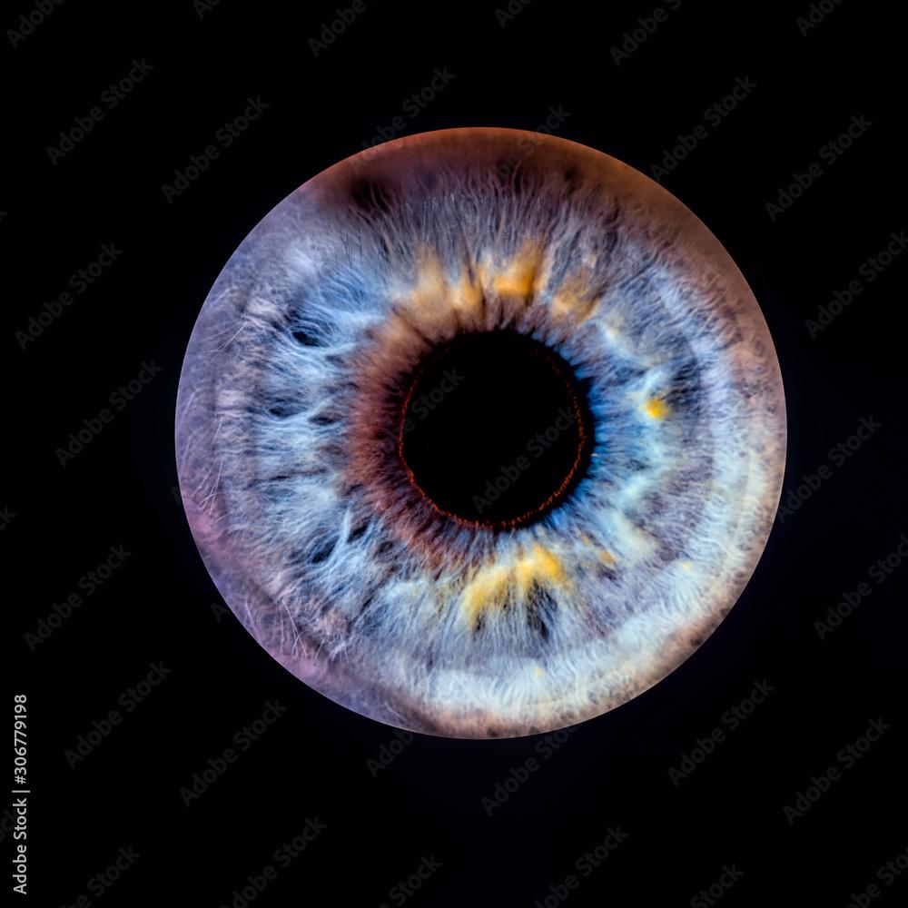 Fototapeta Closeup of an human eye