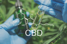 CBD Formula , Oil CBD THC Cannabis. The Concept Of Taking Hemp In Food. Cannabis Extract In The Hands Of A Doctor. Cannabis Oncology Treatment. Close Up, Medical Marijuana.