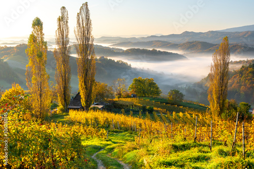 Fotografía  Grapevine valley and hills covered with mist in Austria, autumn 2019
