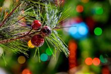 Christmas Tree Lights And Pine...