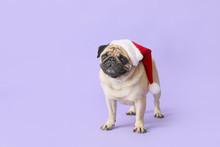 Cute Pug Dog In Santa Hat On C...