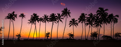 Fototapeta tropical sunrise with palm trees at dawn in the town of Kapaa, Kauai, Hawaii obraz