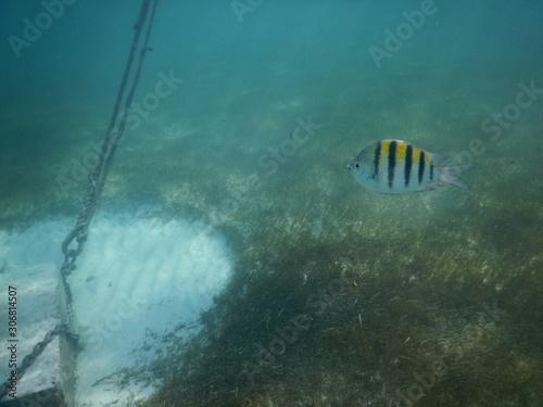 fish in the sea Tablou Canvas