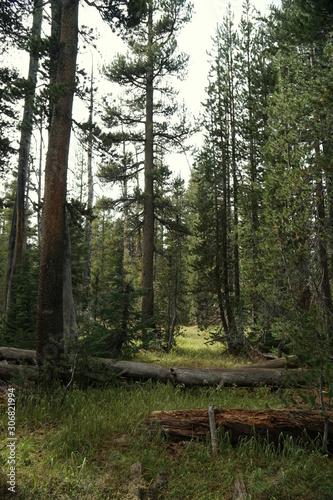 Yosemite and surrounds