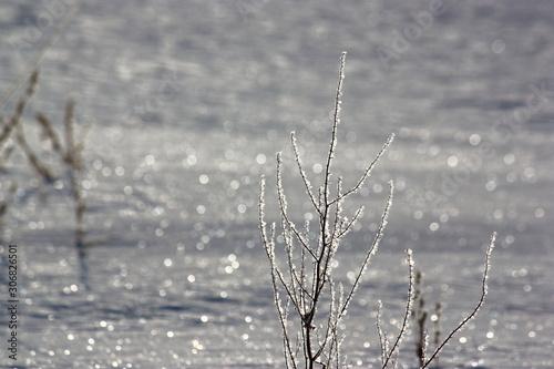 Obraz na plátně  氷点下の雪原の煌めき。氷を纏った枯草と太陽の光に輝く雪面。