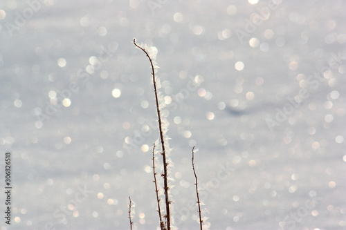 Valokuva 氷点下の雪原の煌めき。氷を纏った枯草と太陽の光に輝く雪面。