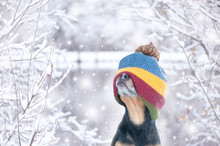 Funny Photo Of A Dog In A Hat Stretched Over His Eyes In A Beautiful Winter Forest. Can't See, Closed Eyes . Waiting For Surprises And New Year's And Christmas Gifts