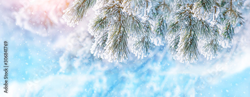 Foto auf AluDibond Licht blau winter nature background with snowy fir branches. Christmas tree on frosty snowy landscape. beautiful winter season scene, New Year and Xmas concept. close up, soft selective focus. banner
