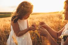 Lovely Little Girl Holding Whe...