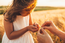 Close Up Of A Lovely Little Girl Holding Wheat In Her Little Hands Against Sunset. New Life Concept.