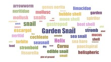 Garden Snail Word Cloud Animat...