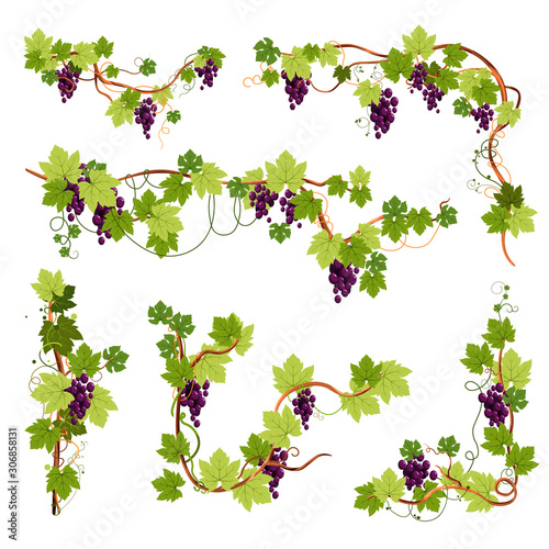 Vine decor, grapes bunches on branches or twigs isolated icons Canvas-taulu
