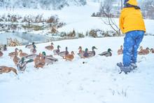 Little Girl Feeds Ducks In Win...