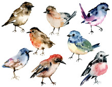 Birds, Set Watercolor Painting...