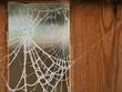 canvas print picture Frosty Cobweb