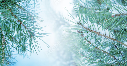 Winter christmas background with copy space, bokeh, snowflakes. Snowy landscape with fir branches. Blue toning - 306876585