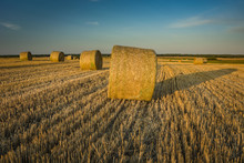 Round Hay Bales Lying In The F...