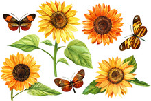 Watercolor Set Ofsunflowers And Butterflies, Hand Drawn Floral Illustration Isolated On White Background. Perfect For Wedding,invitation,template Card.