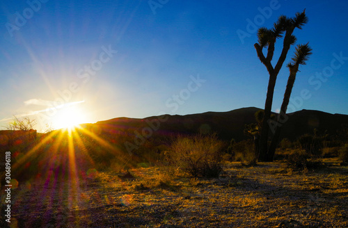 Fototapety, obrazy: Beautiful scenic landscape view of backlit silhouette of Joshua Tree cactus in National Park in California with rising sun sunrise and sun rays in early morning in the desert