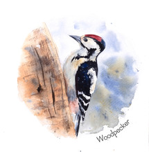 Watercolor Drawing Woodpecker ...