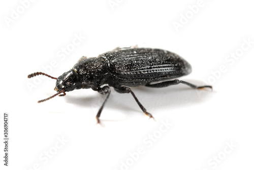 side view small beetle close up on white background Tablou Canvas