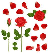 Red Roses. Beautiful Romantic ...