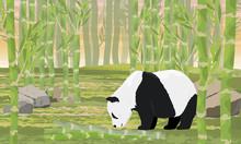 Giant Panda Sniffs The Fallen ...