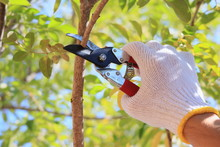 DIY 庭木の剪定