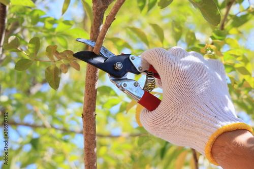 Fotomural DIY 庭木の剪定