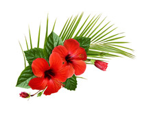 Red Hibiscus Flowers, Buds And...
