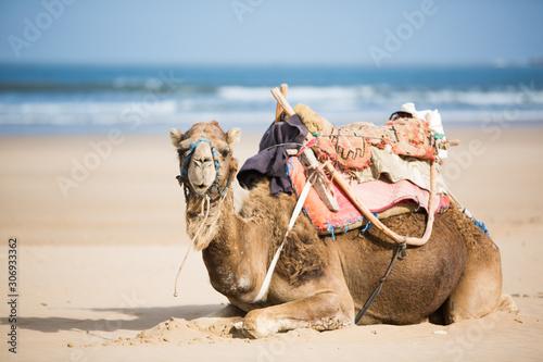 Cuadros en Lienzo Essaouira, Maroc
