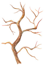 Dry Bare Tree. Watercolor Pain...