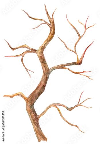 Valokuvatapetti Dry bare tree. watercolor painting