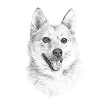 Head Of Handsome Dog Isolated On White Background. Cute Puppy. Realistic Hand Drawing Of A Puppy. Animal Art Collection: Small Dog Breed. Good For Print T-shirt, Banner, Pillow. Design Template