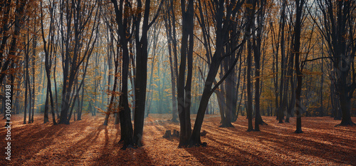 morning autumn forest with sunrise light beams Canvas Print