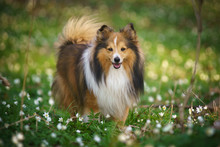 Portrait Of A Dog In The Flowers