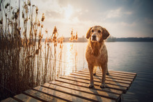Dog On The Pier