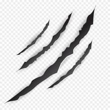 Claws Scratches - Vector
